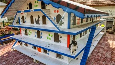 Antalya'da 3 katlı, 64 odalı 'kedi apartmanı' yapıldı