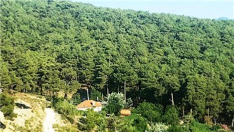 Ormanlık alanları devletten kiralama dönemi başladı!