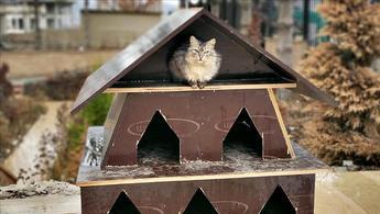 TOKİ'den kalan malzemeler sokak hayvanlarına ev oluyor!
