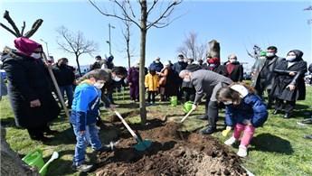 Üsküdar'da izinsiz kesilen ağaçların yerine yenisi dikildi!