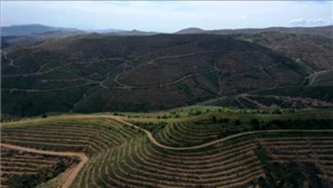 İzmir'de yanan ormanlık alana 6.5 milyon fidan dikildi!