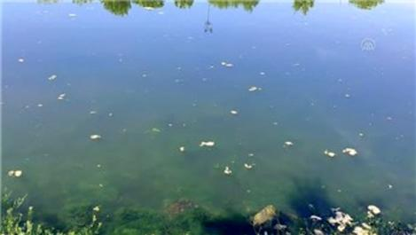Küçükçekmece'de vatandaşlar gölün kirliliğinden şikayetçi!
