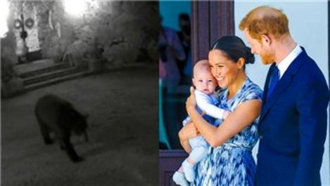 Prens Harry ve Meghan Markle'ın bahçesine ayı girdi!