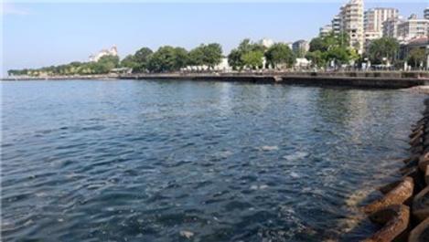 Marmara Denizi'nden 6 bin 564 metreküp müsilaj temizlendi