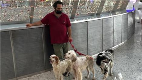 İstanbul Havalimanı'nda evcil hayvan odası 7/24 hizmet veriyor
