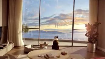 Manzara Adalar'ın yetenekli köpek Max'li reklam filmi!