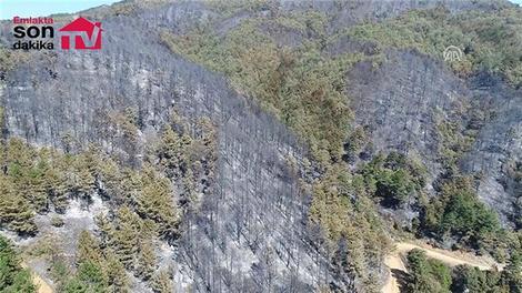 Sakarya'daki orman yangını havadan görüntülendi!