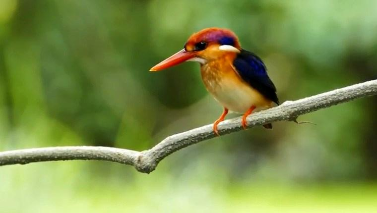Onlarca kuş türü Düşler Vadisi Riva'da sizleri bekliyor